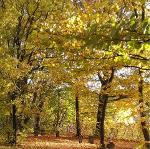 Innweg im Herbst