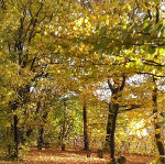 Herbstbluesgedicht