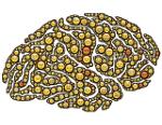 brain-954816_640s